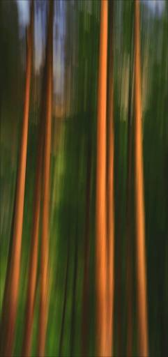 """Among the Tall Timber"" - Highly Commended, Advanced Print - ©Hugh Scott"