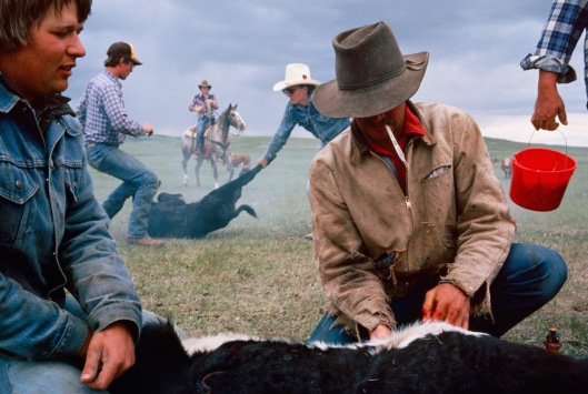 Montana Cowboys brand and castrate their livestock. (c) Sam Abell.