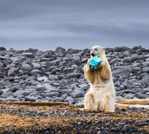 'Plastic scourge on remote Arctic island'